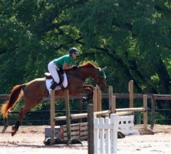 Dressage, Combined Training, and Jumping Schooling Show